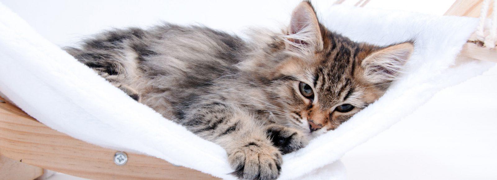 Katzenbaby in er Hngematte